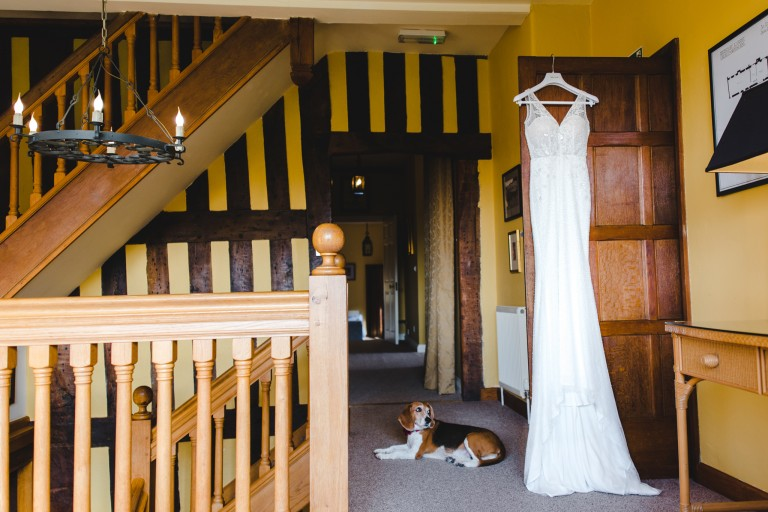 A dog guarding a wedding dress at Brinsop Court